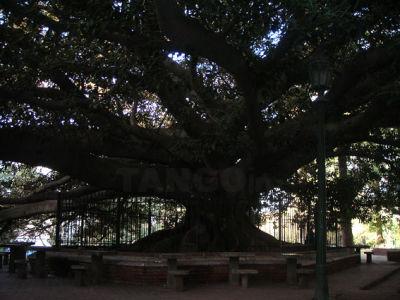 Ombu Agosto 2009
